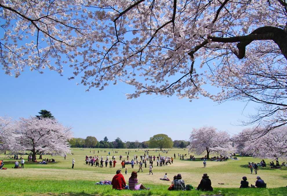 Lugares para viajar - Showa-Kinen-Park Tokyo