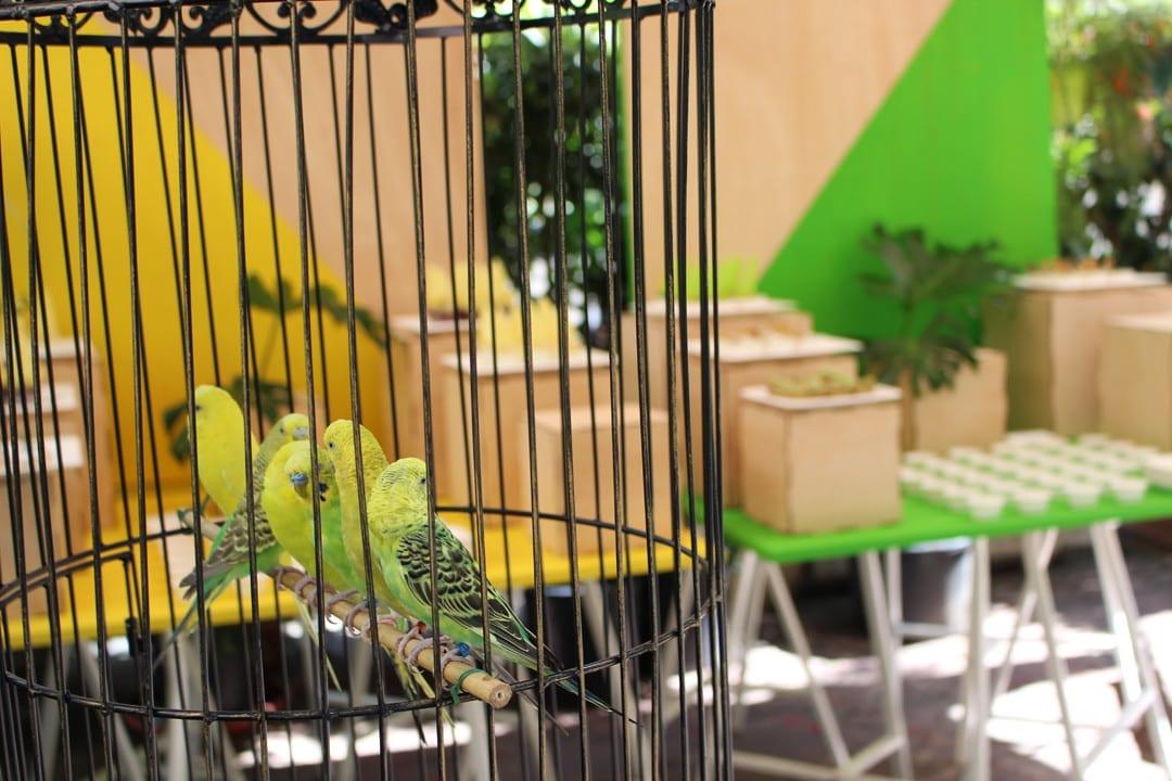 kiwi zespri propiedades presentación kiwi sungold
